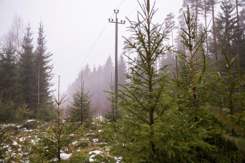 Uus algatus Eesti metsa kaitseks, riigi metsanduspoliitika pälvib kriitikat