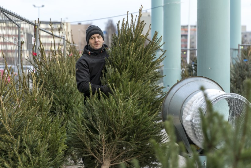 Jõulupuu tahab valgust ja vett