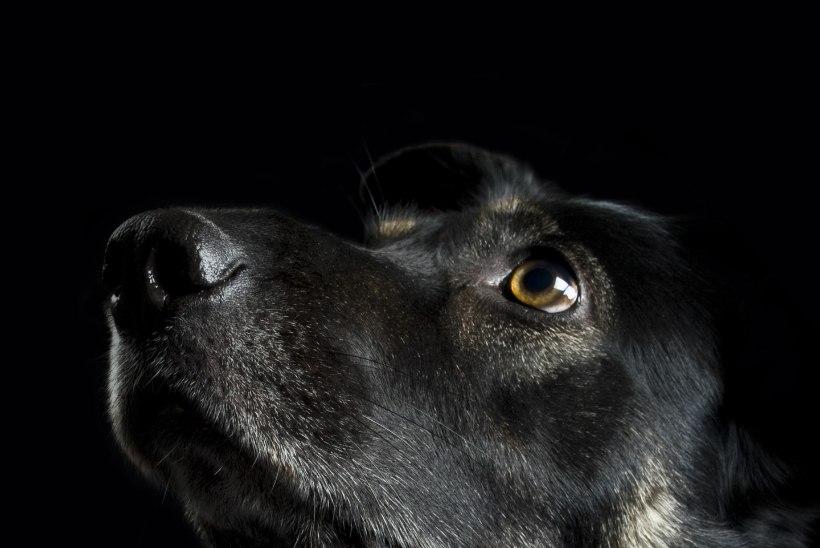 KOER, KES KANNATAB: külamees jättis koera hooletusse