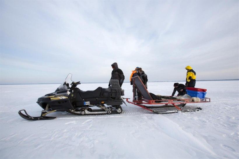 Liikumisvahendid jääl: mootorsaan vs ATV II