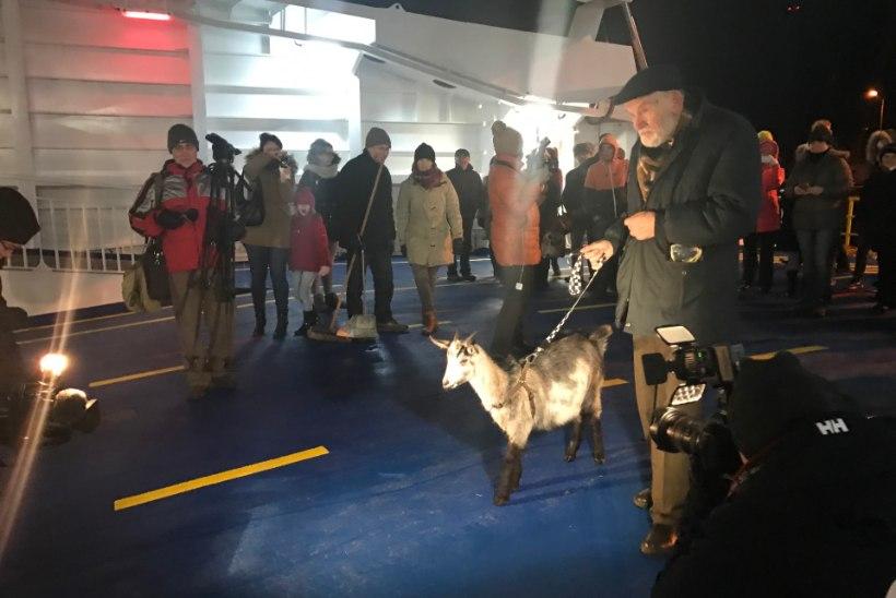 GALERII JA VIDEO | Leigrit tervitasid Heltermaa sadamas vanamees ja kits
