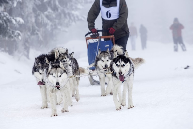 Mida talvisel ajal teha? Võta ette AKTIIVNE TEGEVUS looduses