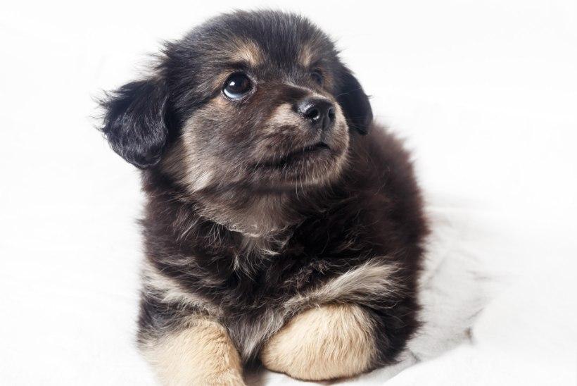 Video: Kuidas oma lemmiklooma ilutulestiku eest kaitsta