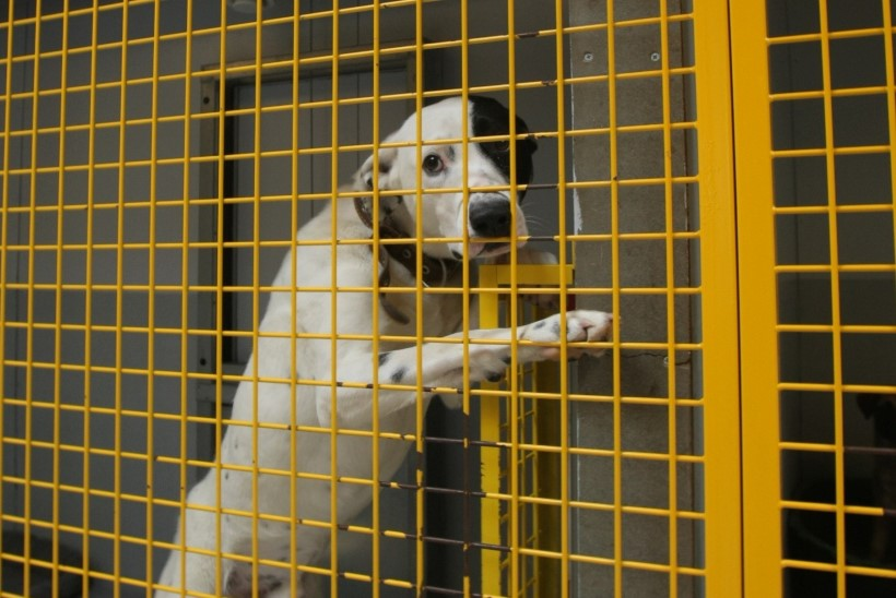 Linn hakkab mõõtma koerte varjupaiga mürataset