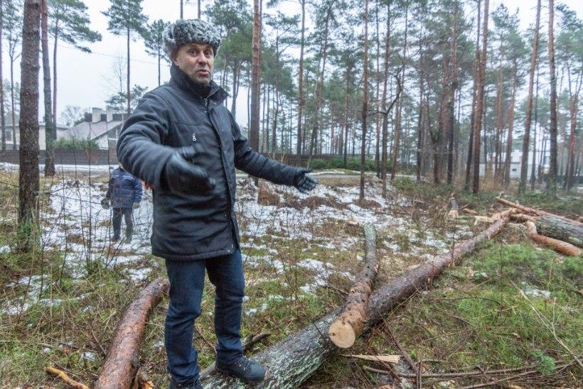 Tallinnas Nõmme serval asuvasse metsa raiuti kibekähku täpselt majakujulised augud