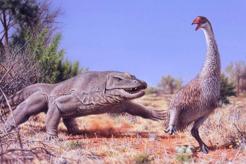 Miks Austraalias pole hiidlinde? Inimesed sõid nende munad ära!