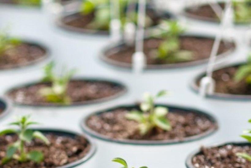Aknalauahooaeg on peagi avatud! Too värske rohelisega tervislik taldrikule