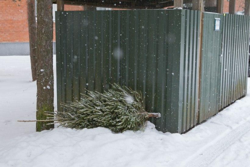 Äraviimata jõulukuused toovad tuhandeid eurosid trahvi