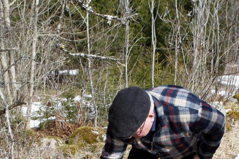 Metsavana teab, kuhu jääb kevad ning millal puhkust võtta