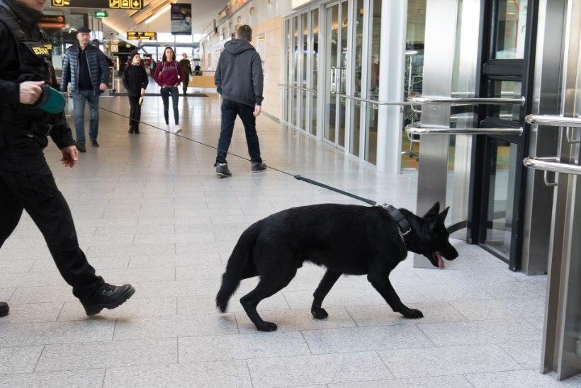 Brüsselist naasnud eestlane: juba varem ei julgenud metroos käia