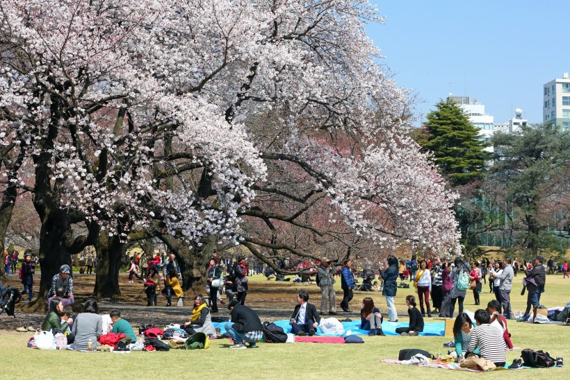FOTOD | KEVAD TULEB! Jaapanis algas kirsiõite aeg