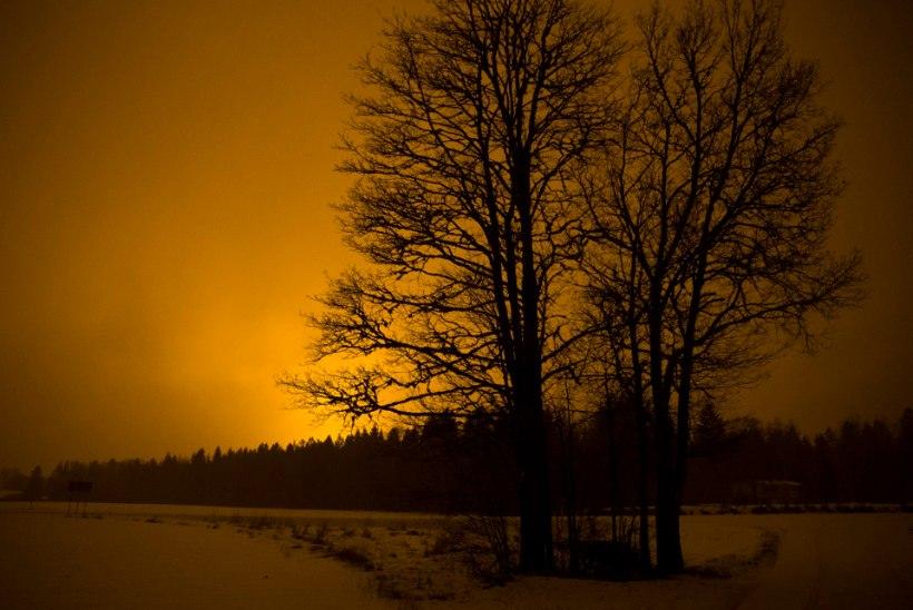 Ettevõtja kasvuhoone valgus ei lase öist taevast nautida!