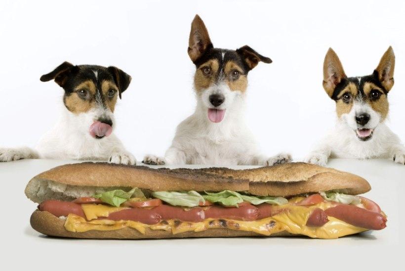 TOIDUD, MIS MUUTSID AJALUGU: kuidas taksivõilevast sai kuum koer ja miks on kaaviar nii kallis