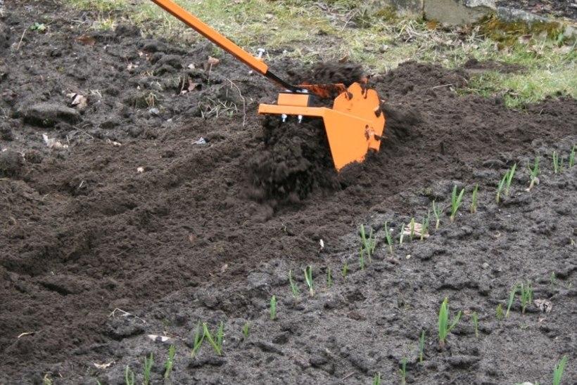 RÕÕM KEVADEST   Kaval viis, et kindlustada umbrohuta aiamaa!