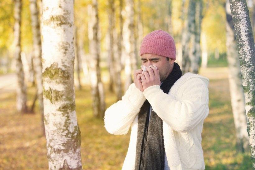 Kolm nippi, kuidas kevadine allergia kontrolli alla võtta