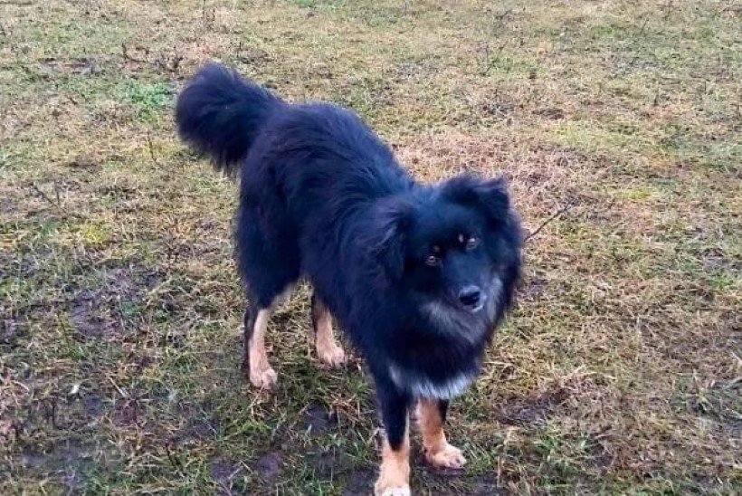 Jooksu pannud koer rändas üle 100 kilomeetri