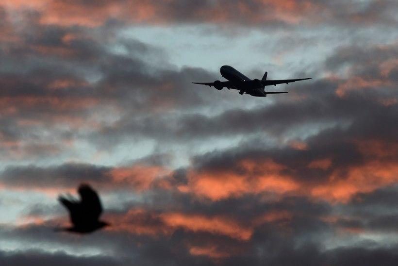 Suurbritannias tabas reisilennukit droon
