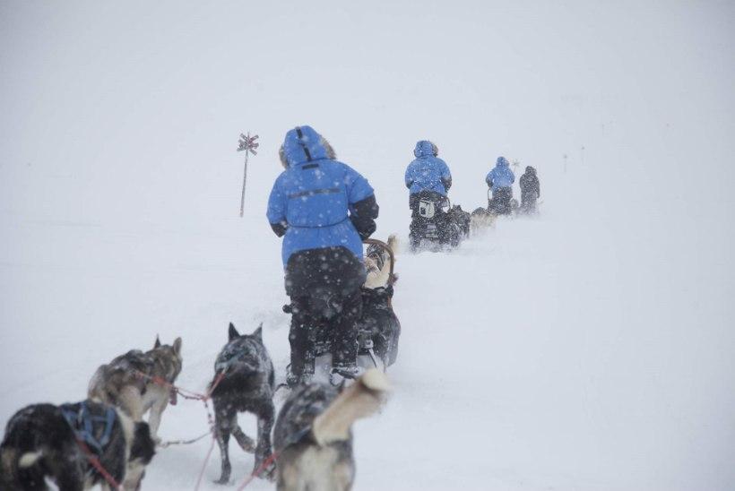 Hans Markus Antson: kui tundrasse eksisime, pidid koerad meile teed rajama