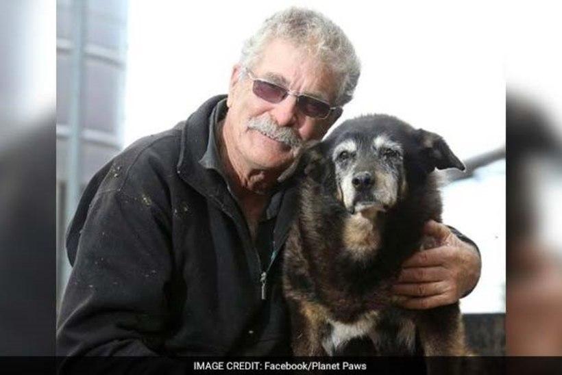 Maailma vanim koer suri 30aastasena