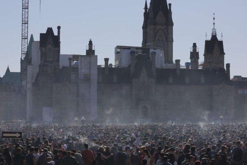 Kanada peaminister täidab valimislubadust: valitsus valmistub marihuaanat legaliseerima