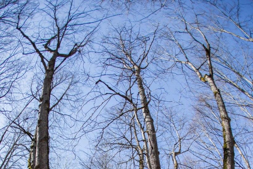 Uppumine, sissepõlemine ja äkksurm tabab seda, kes rüvetab hiit, ohvrikivi, püha puud või jõekääru