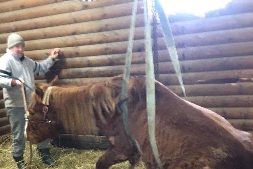 Noore naise ratsutamiskihk lõppes loomapiinamisega