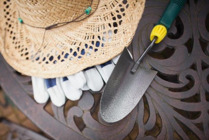 Aiatööd aprillis: istuta amplisse, külva suvelilli ning eemalda talvekatted