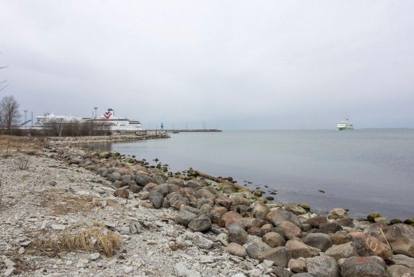 Tuliuus Reidi tee – kas liiklust parandav mereäärne promenaad või veoautode paradiis?