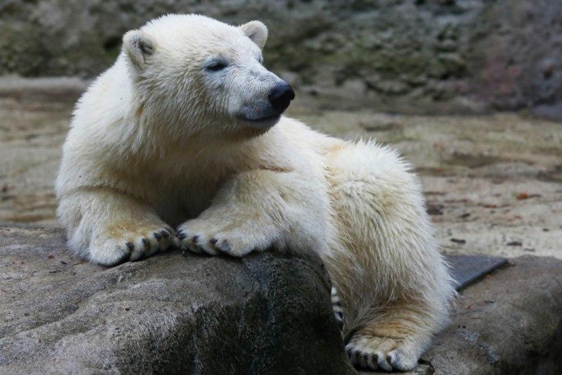 """Turovski: """"Nii mõnedki sõrmed on jäänud loomaaeda"""""""