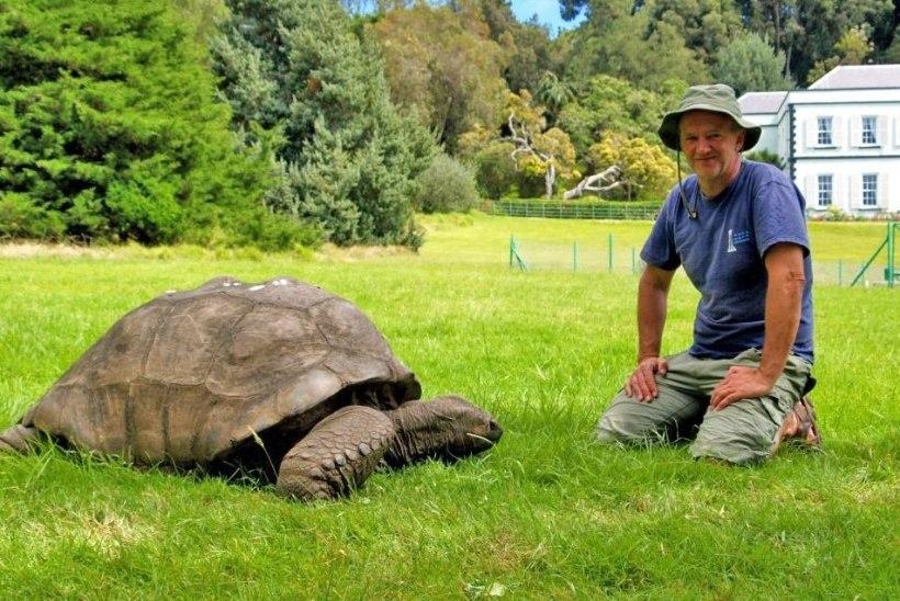 FOTOD   Saage tuttavaks! Maailma vanim kilpkonn on 184aastane