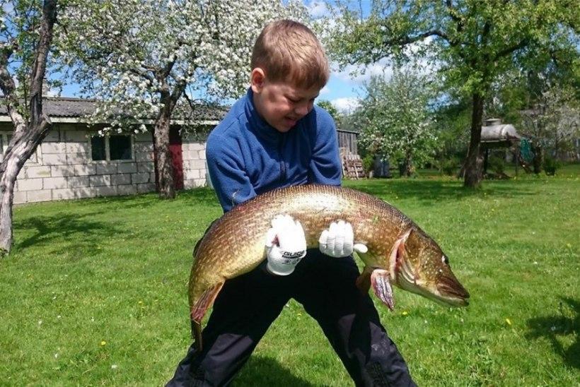 Kaheksa-aastane poiss püüdis Paunküla veehoidlast 9,4 kg haugi