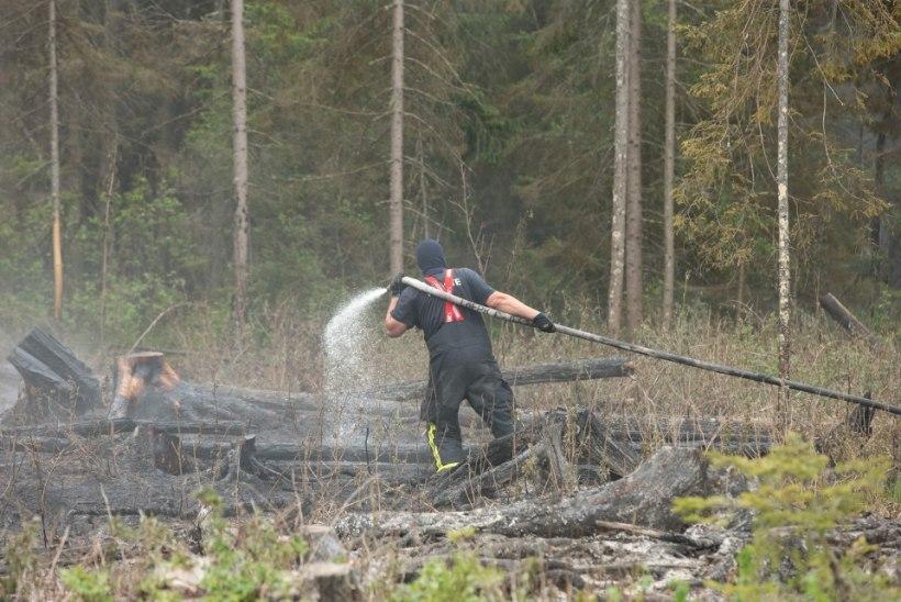 Valgamaa põleng hävitas metsa ja metsiste elupaiga