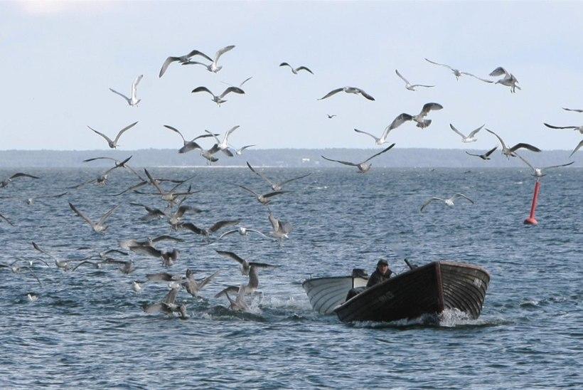 """Pärnu lahe nõuetele mittevastavate püügivahendite osas on """"aeg maha võetud"""""""