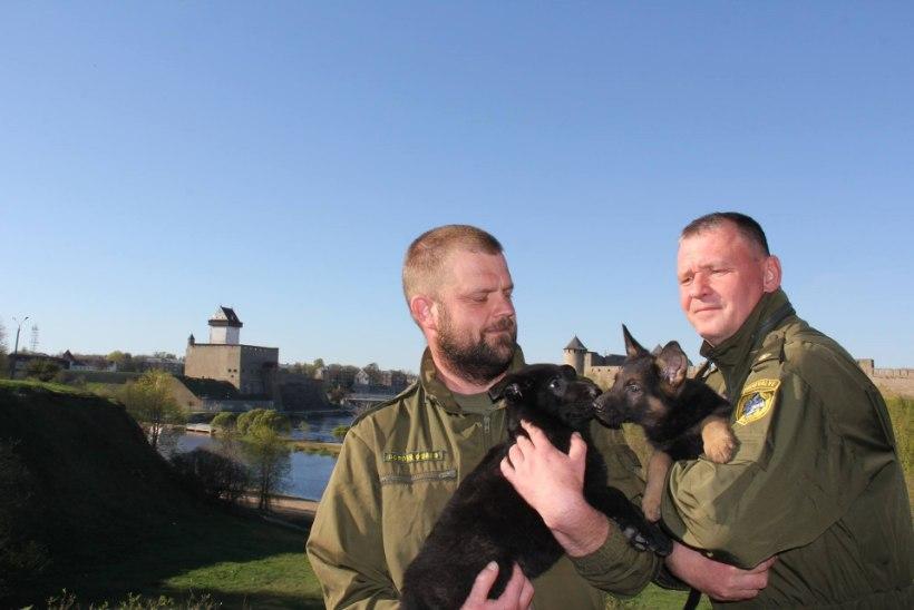 PILTUUDIS   Saage tuttavaks: politsei uued töötajad Trol ja Tommy!