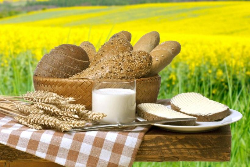 Piim läks hapuks? Kasuta seda toitudes, aias või kehahoolduses.