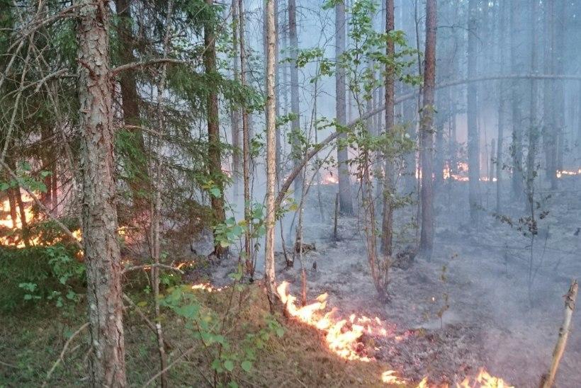 Ida-Viru metsapõlengul otsitakse tulepesi ja tehakse järelkustutust