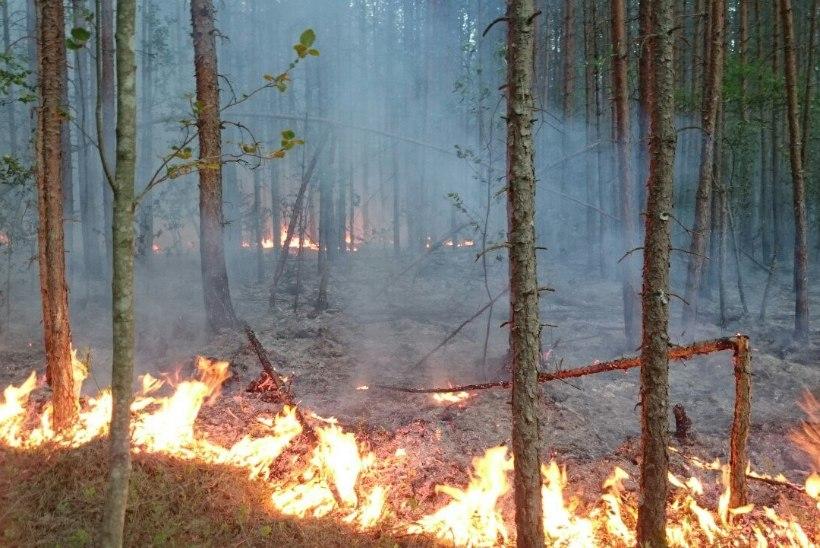 Ida-Virumaa metsatulekahju piirkonnas on avastatud uus metsapõleng