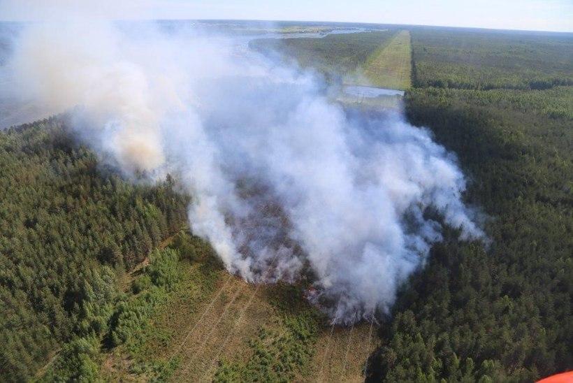 Ida-Viru metsatulekahju kustutustööd jätkuvad ja põlengule ei ole veel piiri saadud