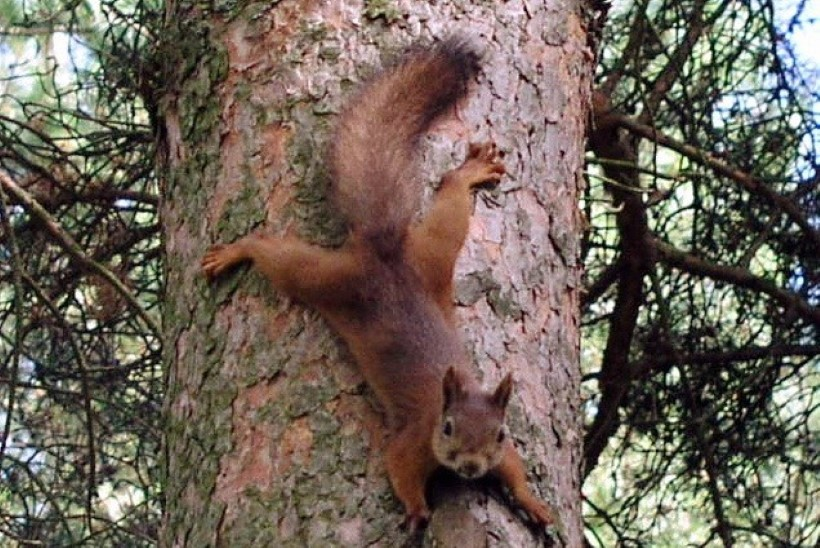 Oravamüügile tehti lõpp