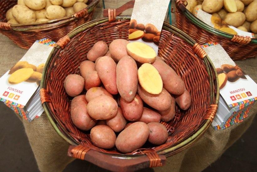 Mihkel Zilmer: Varane kartul teeb banaanile silmad ette!