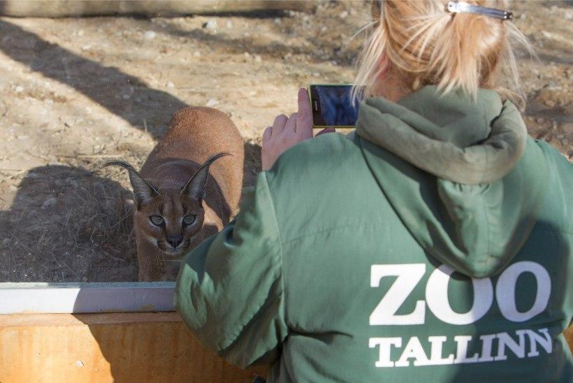 Tallinna loomaaia direktori ametikohale tormi ei joosta
