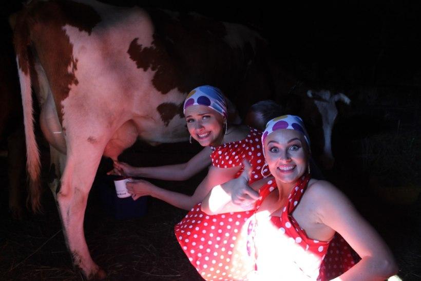 GRETE KLEIN: pidin lehma kinni püüdma, et teda lüpsta, aga hoopis lehm hakkas mind taga ajama!