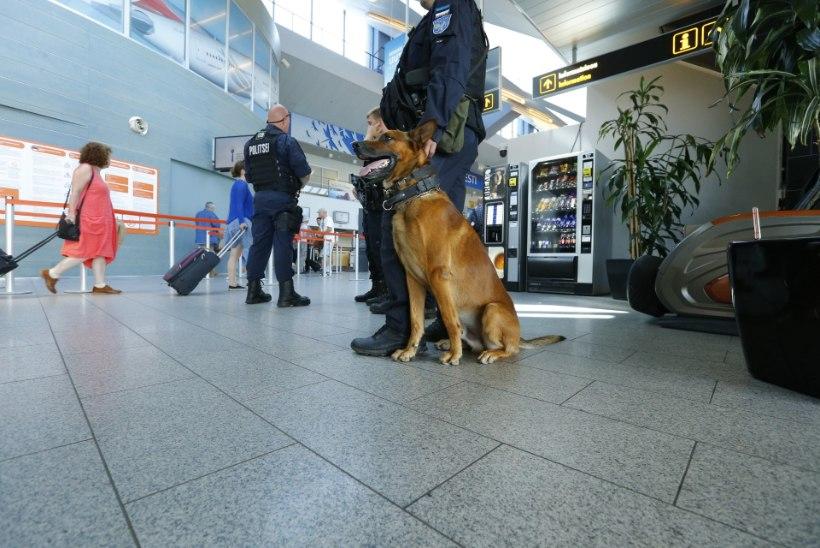 Olukord lennujaamas: lapsevanemad näitasid lastele politseikoera