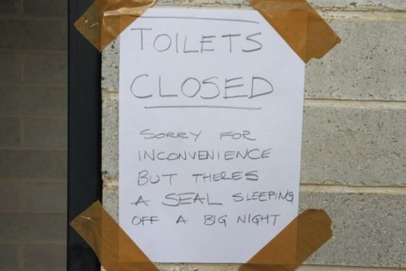 Tasmaania tualetist leiti magav hüljes