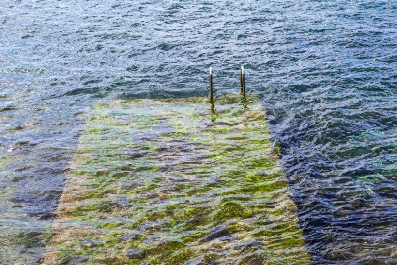 Terviseamet: merevetikad võivad tekitada ärritusnähte tundlikel inimestel