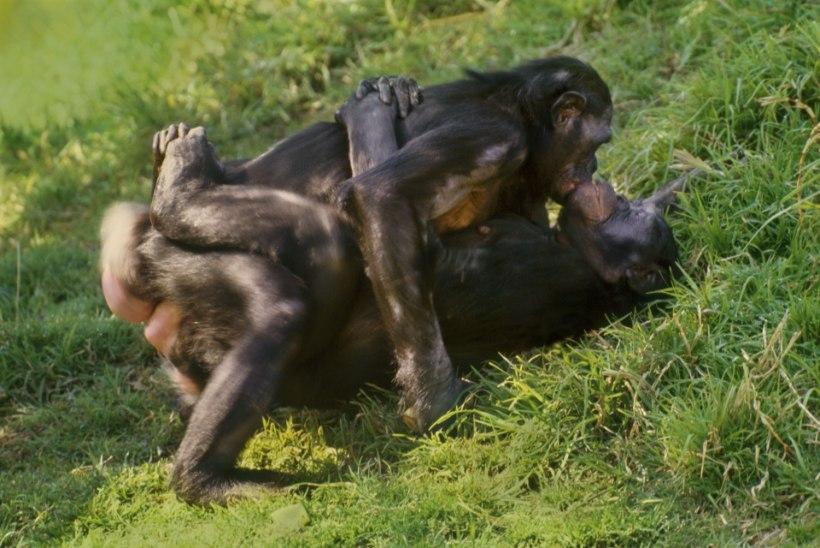 Miks me armastame suudelda, kui teised loomaliigid seda ei tee?