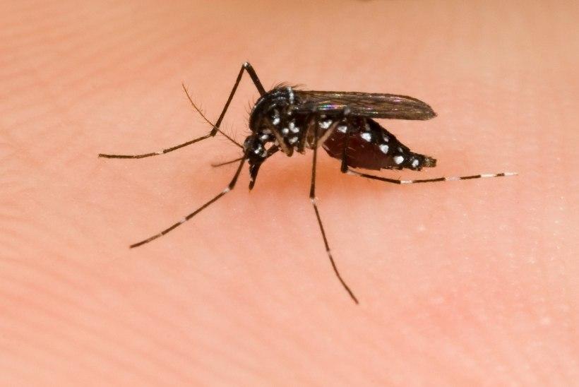 Terviseamet: sääsehammustus reisil võib kaasa tuua ka mõne teise nakkuse peale Zika