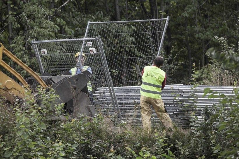 TÕETUND: Poolas hakatakse täna natside kullarongi välja kaevama