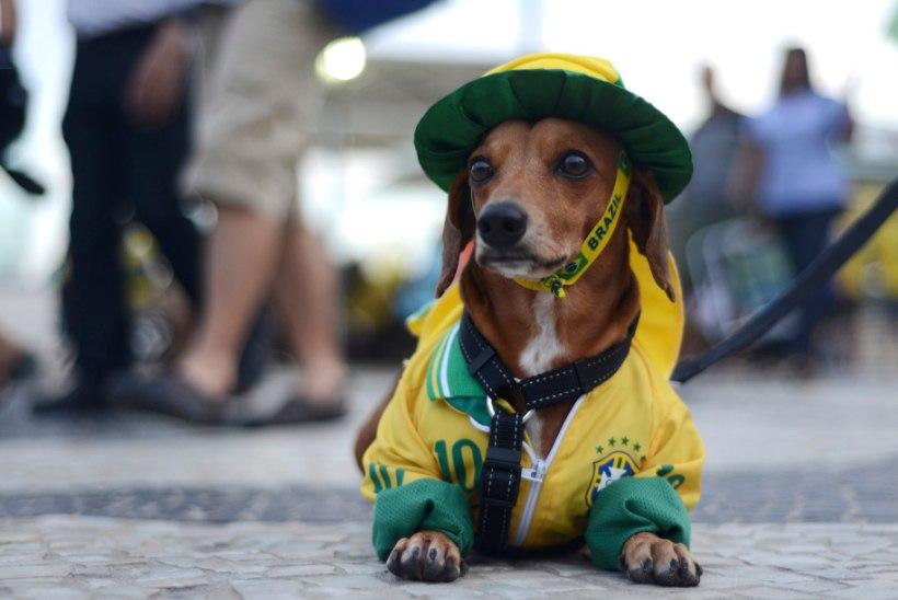 Deivil Tserp   Isegi koerad kardavad Rios oma elu pärast