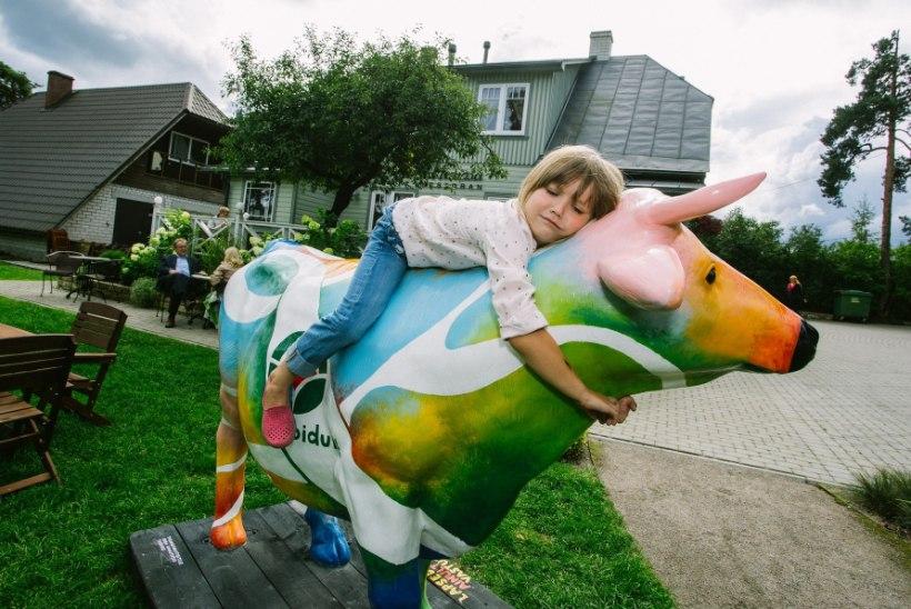Värviline lehm kutsub piimatooteid tarbima, veganid peavad kampaaniat eksitavaks